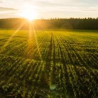 Рынок земли: как купить землю – алгоритм для покупателя